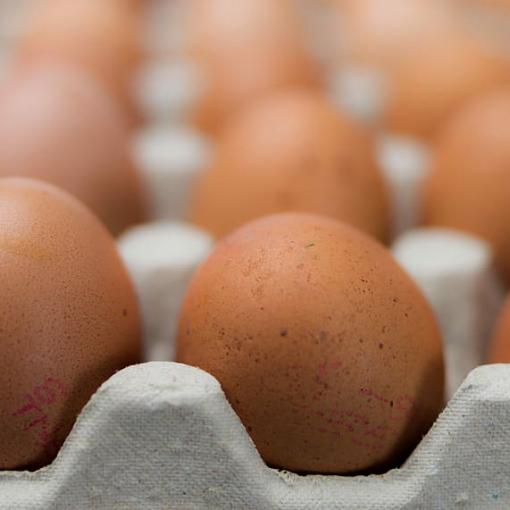 envase huevos